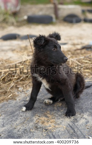 homeless black young dog on dirty beach - stock photo