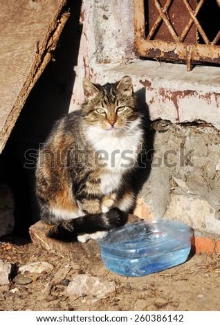 homeless cat drinks water - stock photo