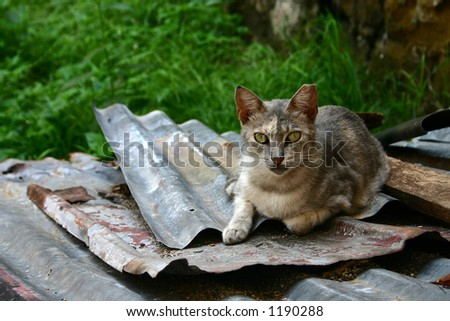 Homeless cat staring at you. - stock photo