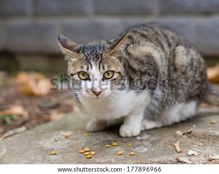 homeless cat staring at you while eating - stock photo