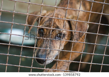 Homeless dog in the cell. India - stock photo
