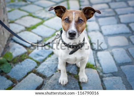 homeless dog lonely with leash - stock photo