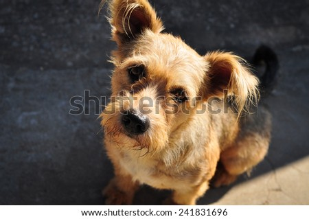 homeless dog looking up - stock photo