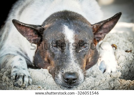 homeless dog on the beach, focus on nose - stock photo