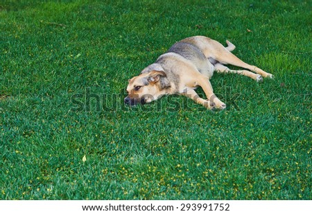 Homeless dog on the lawn grass - stock photo
