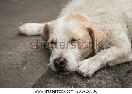 Homeless dog sleep on the side street - stock photo