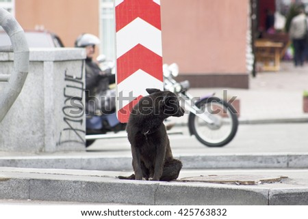 Homeless dog waiting for someone near the road sign - stock photo