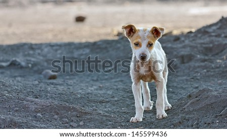 homeless dog waiting something in a slag - stock photo