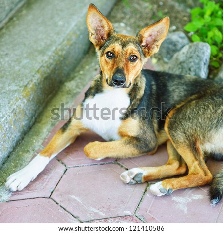 Homeless lonely dog lying on pavement of city streets. - stock photo