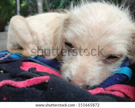 homeless puppies - stock photo