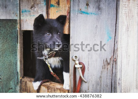 Homeless puppy in a shelter for dogs. - stock photo