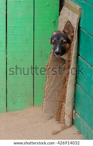 homeless puppy in a shelter for dogs in summer day - stock photo