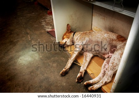 Homeless Stray - stock photo