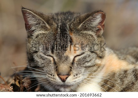Homeless Wild Feral Cats in the Woods. - stock photo