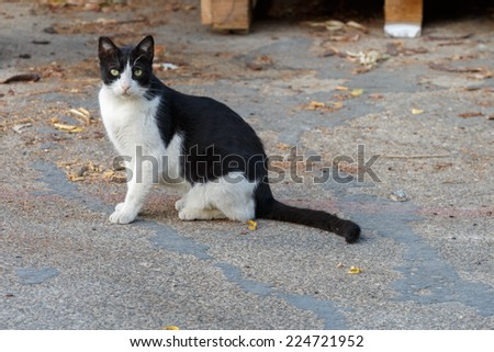 Homeless young black and white cat - stock photo