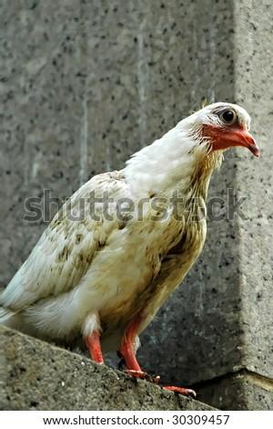 homely bird on ledge - stock photo