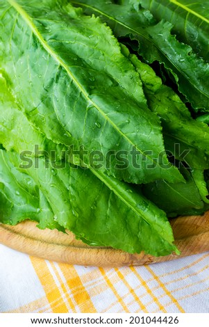 Homemade stuffed 'sour dock' leaves with rice and vegetables. - stock photo