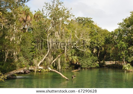 Homosassa Springs Wildlife State Park, Florida - stock photo