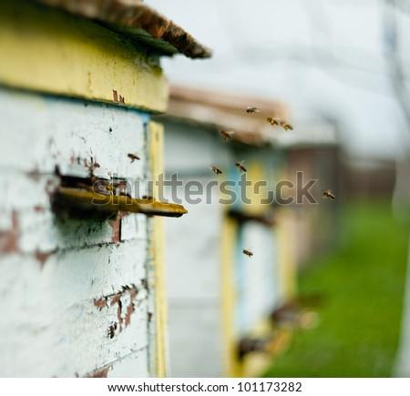 Honey bee hives - stock photo