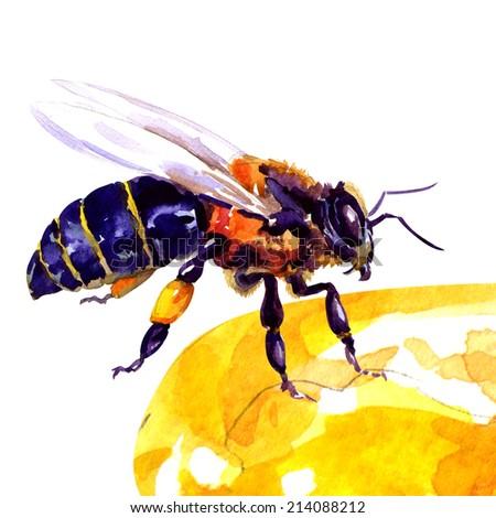 honey bee, isolated on white - stock photo