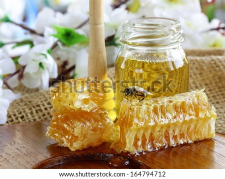honey bee on a honeycomb (natural product) - stock photo