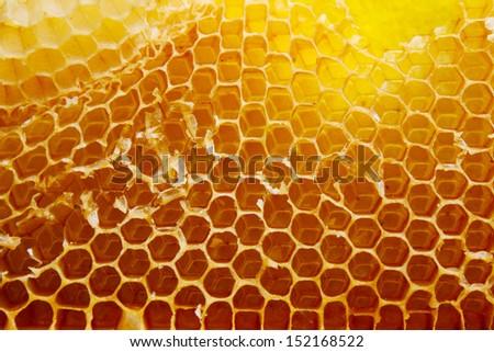 Honey beehive - stock photo