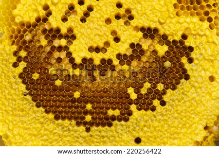 Honey beehive -close up background  - stock photo