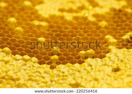 Honey beehive closeup. background - stock photo