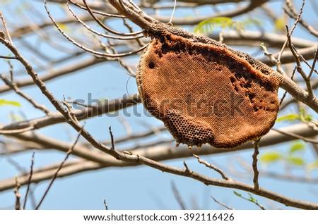 Honey bees and hive on tree branch, with place for your text - stock photo