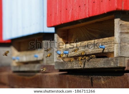 honey bees collecting pollen carrying it into the bee-hive, closeup bee-hive entrance - stock photo