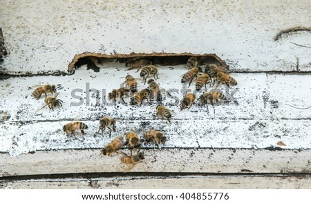 Honey Bees on Hive - stock photo
