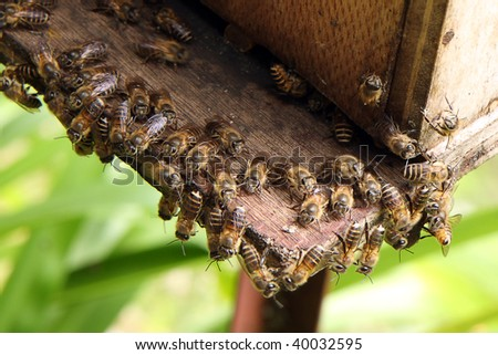 Honey bees surrounding the beehive in a bee farm.