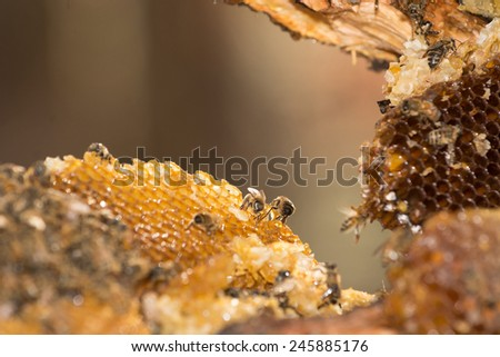 Honey bees swarm around a hive damaged after the tree it was in collapsed in Smoky Mountain National Park - stock photo