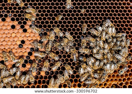 Honey Bees Working. Bees inside a beehive - stock photo