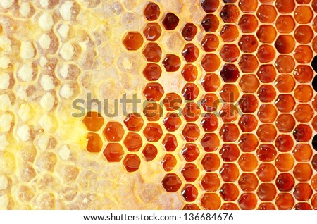 Honey in frame. Texture design. - stock photo