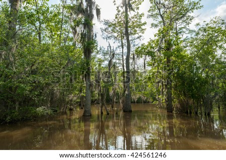 Honey Island Swamp Tour With Jungle Forest and Tree in New Orleans, Louisiana - stock photo