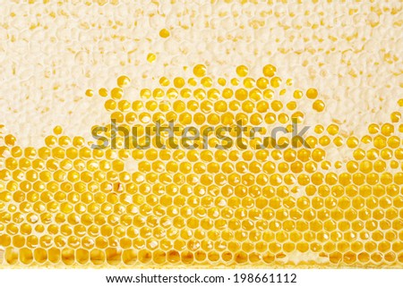 honey making in honeycombs  - stock photo