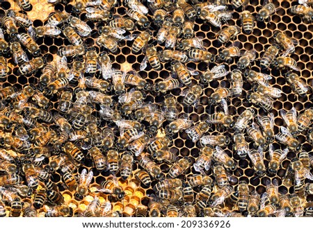 Honey work in progress! Bees closeup showing many animals and honeycomb structure. - stock photo
