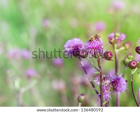 Honeybee (bee) on a burdock - stock photo