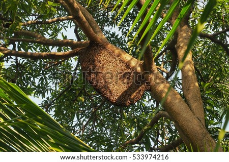 Honeybee swarm hanging on the tree in nature