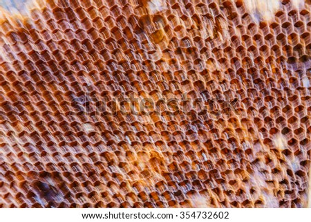 Honeycomb background blurry