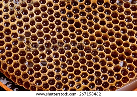 honeycomb cells natural background - stock photo