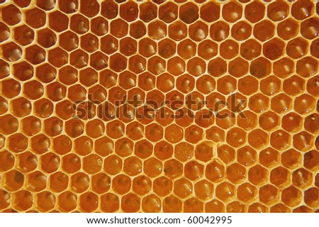 Honeycomb filled with honey - stock photo