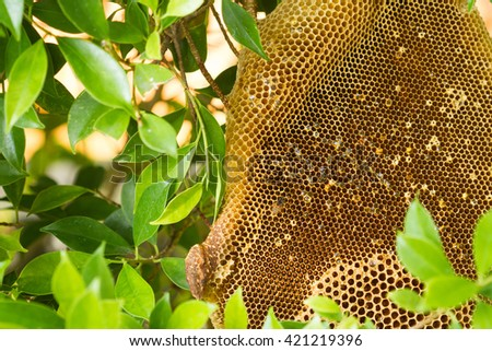 Honeycomb in fallen tree - stock photo