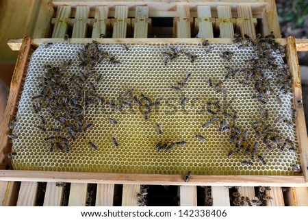 Honeycomb on a beehive