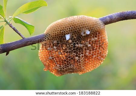 honeycomb on nature background - stock photo
