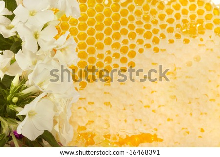 Honeycomb  with natural honey on a white background - stock photo