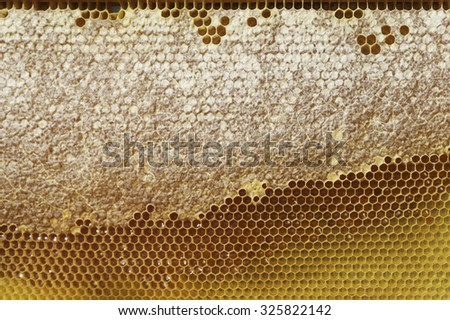 Honeycomb with unfinished honey