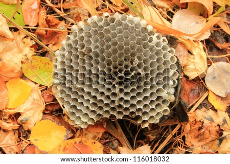 Honeycombs on a natural leaf background. - stock photo