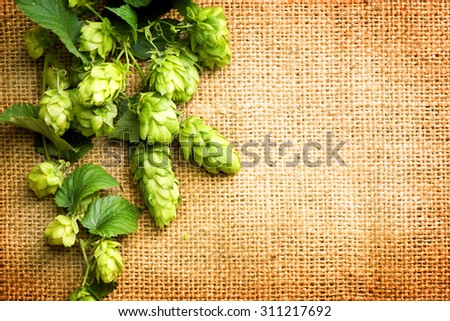 Hop branches with leaves and cones over burlap background. Hop close-up. Inflorescence of hops. Beer brewing concept. Brewery. Beautiful vintage backdrop of fresh hops over shabby sack linen texture - stock photo